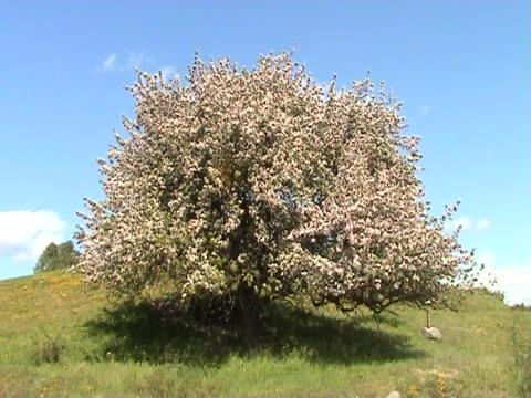 Spring video
