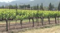 Spring Vineyard video