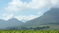 Spring Vineyards Time Lapse video