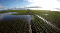 Spring water puddles on young green wheat field, time lapse video