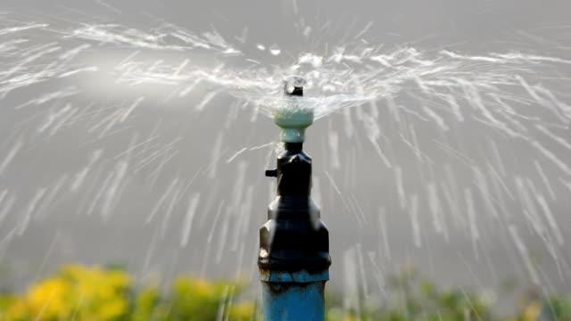 springer for watering flower video