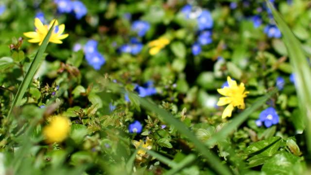Springtime flowerbed bokeh slide video