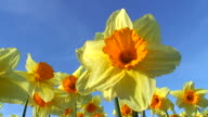 Springtime scenery video
