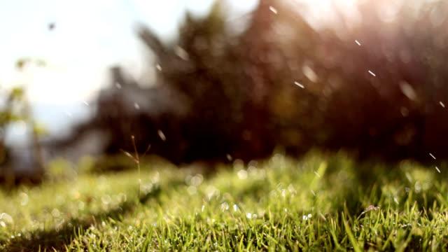 Sprinkler on Green Lawn video