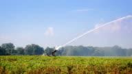 Sprinkler system on potato field video