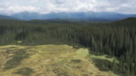 AERIAL Spruce tree forest surrounding a clearing video