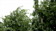 squall weather video