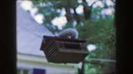 1959: Squirrel invader bird feeder habitat house hanging front yard wildlife watch. video