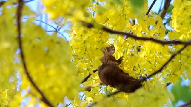 squirrel is eating the flowers video