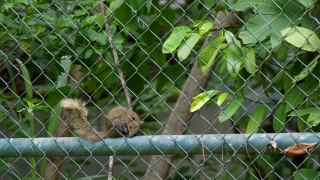 squirrel move through metal fence net video