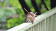 Squirrel on the fence. video