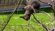 HD: Squirrel video