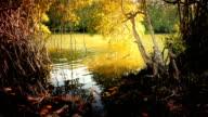 Sri Lanka nature background video