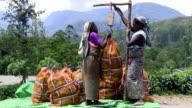 Sri Lanka Tea Plantation Farm Worker video