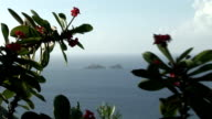 St Barth view of the ocean between tropical flower trees video