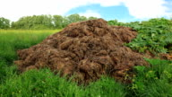 HD - Stable Manure video