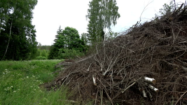 stack tree branches in forest, panoramic view video