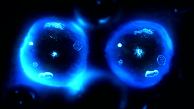 Stages of mitosis. Biology background. Blue/black. video