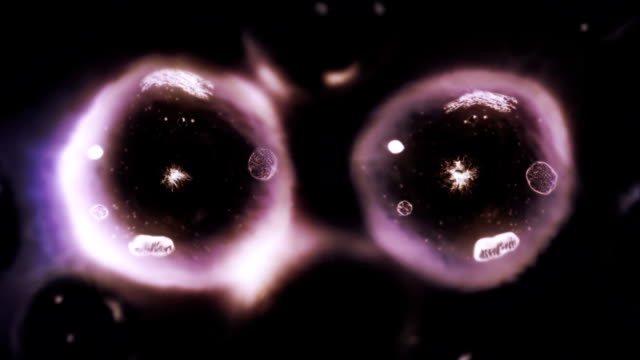 Stages of mitosis. Biology background. Purple. video