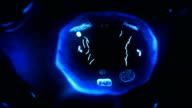 Stages of mitosis. Loopable. Biology background. Blue/black. video