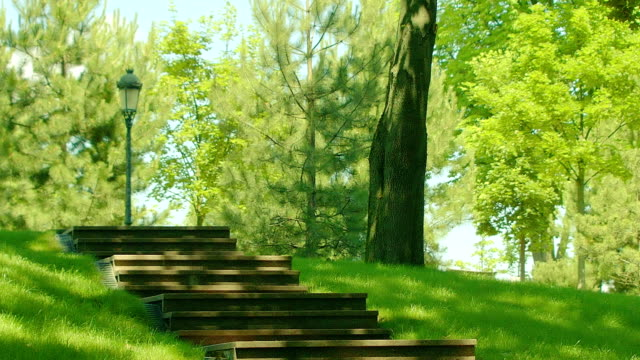 Stairs in park at summer. Park steps in green forest environment video