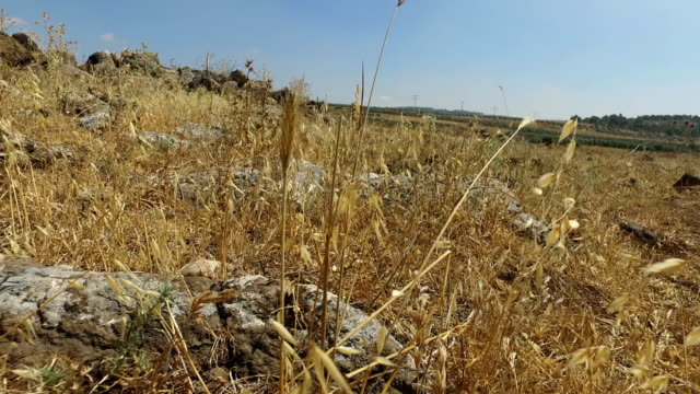 Standing on Remains of Roman Road in Israel video