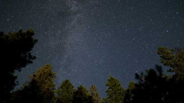 Star time lapse over pine trees video