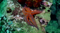 Starfish and sea urchins among rocks on seabed. video