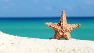 Starfish on caribbean sandy beach video