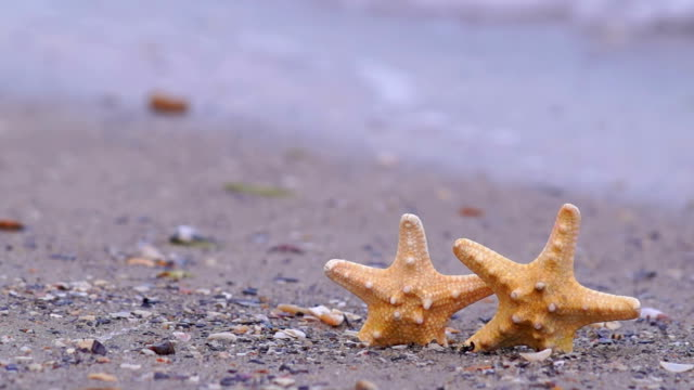 Starfish on the Beach video
