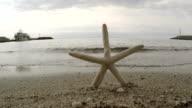 Starfish. Slow motion video