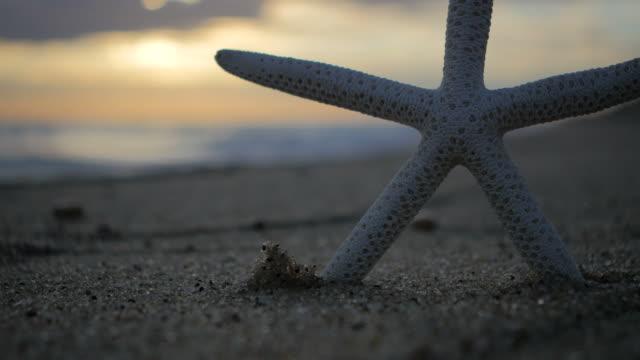 Starfish/Beach/Sunset concept video
