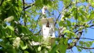 A starling nesting box video