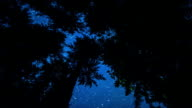 Starry Night in Redwood Forest video