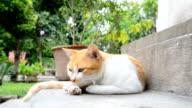 Startled cat. video