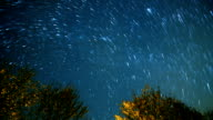 Startrail in the dark night and trees video