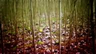 steadicam forest video
