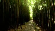Steadicam Shot Thru Bamboo Forest (HD) video