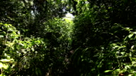 Steadicam Shot Thru Tree Forrest video
