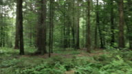HD SteadyCam: Lost in the woods video