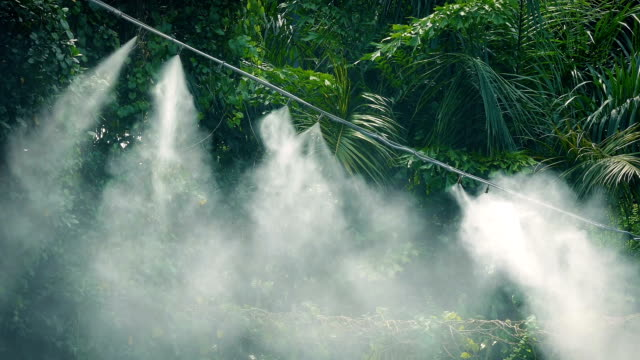 Steaming Irrigation System In Jungle video
