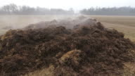 Steaming manure video