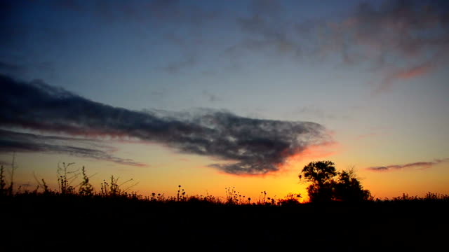 Steppe. Landscape. Timelapse. video