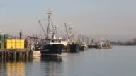 Steveston Harbor, Fishboat Unloading Herring video