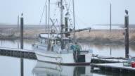 Steveston Snow, Fishboat and Herons video