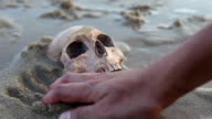 Still Life ,Human Skull on the Sand Beach video