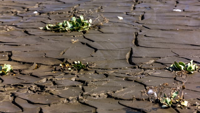 Still Wet But Cracked Soil. Panning. video