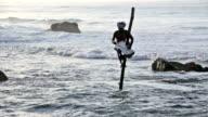 Stilt Fisherman in Weligama, Sri Lanka video