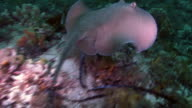 Sting Ray video