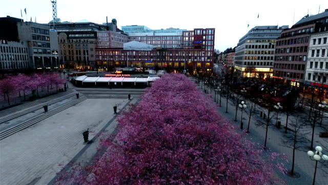 Stockholm Cherry Tree video